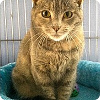 Adopt A Pet :: Maisey - Medway, MA