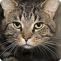 Adopt A Pet :: Benji - Lombard, IL