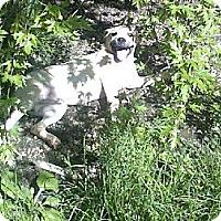 Adopt A Pet :: Milk - Antioch, IL