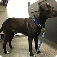 Adopt A Pet :: Pilot - Richmond, VA
