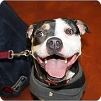 Adopt A Pet :: Soco - Rowlett, TX