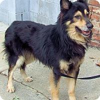 Adopt A Pet :: Laddie - Warren, NJ