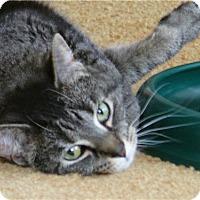 Adopt A Pet :: Gwen - Colmar, PA
