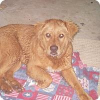 Adopt A Pet :: Luke - Buchanan Dam, TX