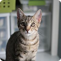 Adopt A Pet :: Oci - Richmond, VA