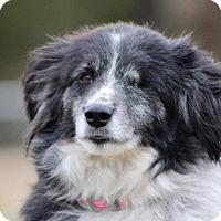 Adopt A Pet :: Delta - Oliver Springs, TN