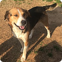 Adopt A Pet :: Buddy in CT - Manchester, CT