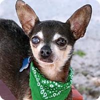 Adopt A Pet :: Coco Beans - Loxahatchee, FL