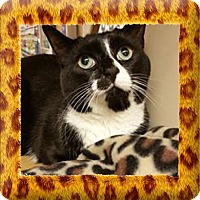 Adopt A Pet :: Nellie - Jackson, NJ