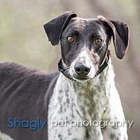 Adopt A Pet :: Cash - Dallas, TX