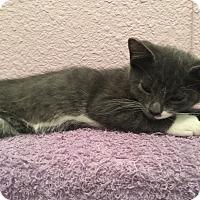 Adopt A Pet :: Linus - Yorba Linda, CA