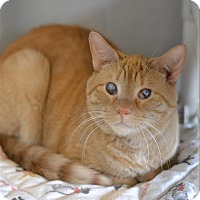 Domestic Shorthair Cat for adoption in Hyde Park, New York - Wrigley - 1353/20
