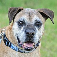 Adopt A Pet :: Konani - Alameda, CA