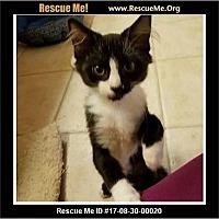 Adopt A Pet :: Daisy - Waldorf, MD