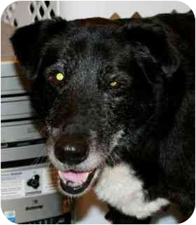 Labrador Retriever Mix Dog for adoption in San Diego, California - SABLE