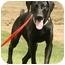 Photo 4 - Pointer Mix Puppy for adoption in Santa Rosa, California - Valerie