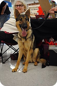 German Shepherd Dog Mix Dog for adoption in Fort Worth, Texas - Bret- Pending
