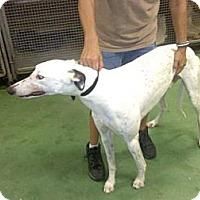 Adopt A Pet :: ZoeZeus - Vidor, TX