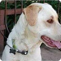 Adopt A Pet :: ABBEY - San Diego, CA