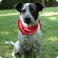 Adopt A Pet :: Gollum - Mocksville, NC