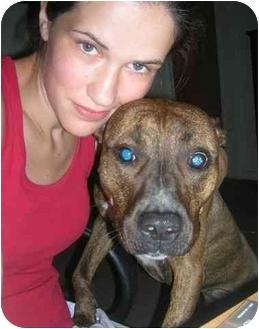 Pit Bull Terrier Dog for adoption in Jackson, Michigan - Matilda aka Tiliie