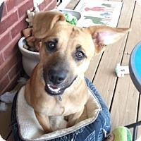 Adopt A Pet :: Anakin - Knoxville, TN