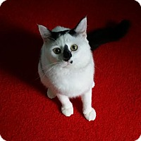 Adopt A Pet :: Allegro - Edmond, OK