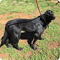 Adopt A Pet :: Annie Oakley - Lindale, TX
