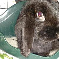 Adopt A Pet :: Minnie - Kenosha, WI