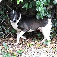 Adopt A Pet :: Jasmine - Indianapolis, IN
