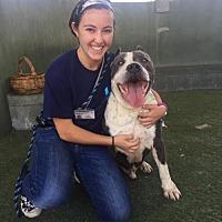 Adopt A Pet :: James - Fullerton, CA