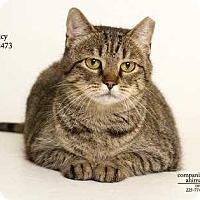 Adopt A Pet :: Lucy - Baton Rouge, LA