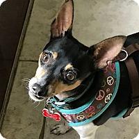 Adopt A Pet :: Parker - Oviedo, FL