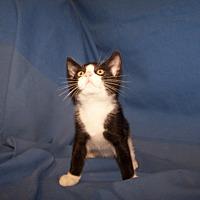 Adopt A Pet :: Pandah - Colorado Springs, CO