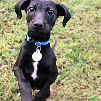 Adopt A Pet :: Tarley - Knoxville, TN