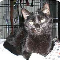 Adopt A Pet :: Sprout - Lombard, IL