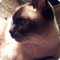 Adopt A Pet :: MoMo - Columbus, OH