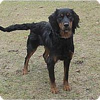 Adopt A Pet :: Willow - DeKalb, IL