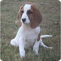Adopt A Pet :: Annabelle (pending adoption) - Adamsville, TN