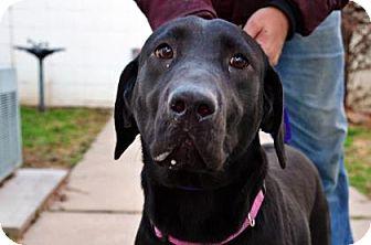 Labrador Retriever Mix Dog for adoption in Fort Smith, Arkansas - Lillian