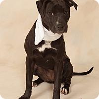 Adopt A Pet :: Hope - Bradenton, FL