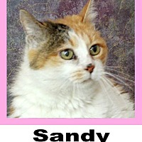 Calico Cat for adoption in Plano, Texas - Sandy