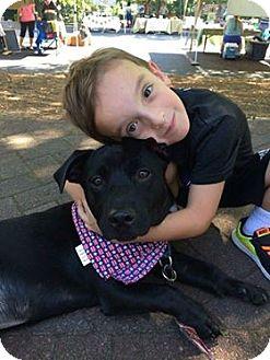 Labrador Retriever Mix Dog for adoption in Alpharetta, Georgia - Christian