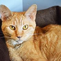 Adopt A Pet :: Abby - Lincoln, NE