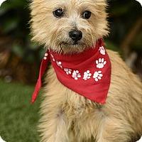 Adopt A Pet :: Alfie - Rancho Palos Verdes, CA
