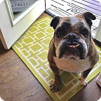 Adopt A Pet :: Wilson - Park Ridge, IL