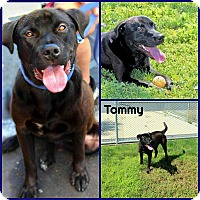 Adopt A Pet :: Tommy - Yuba City, CA