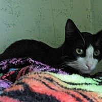 Adopt A Pet :: Tony - St. Johnsville, NY