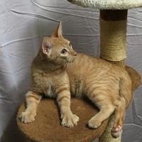 Adopt A Pet :: Louis - Salem, OH