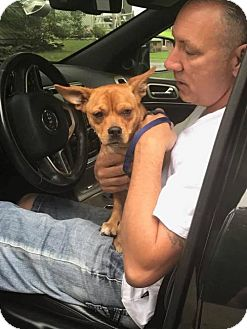 Terrier (Unknown Type, Medium) Mix Dog for adoption in Tenafly, New Jersey - Lloyd